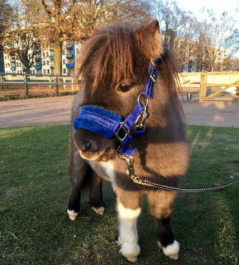 Pony's - NME-Centrum en Kinderboerderij De Elzenhoek