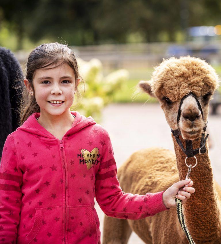 Alpaca's - NME-Centrum en Kinderboerderij De Elzenhoek