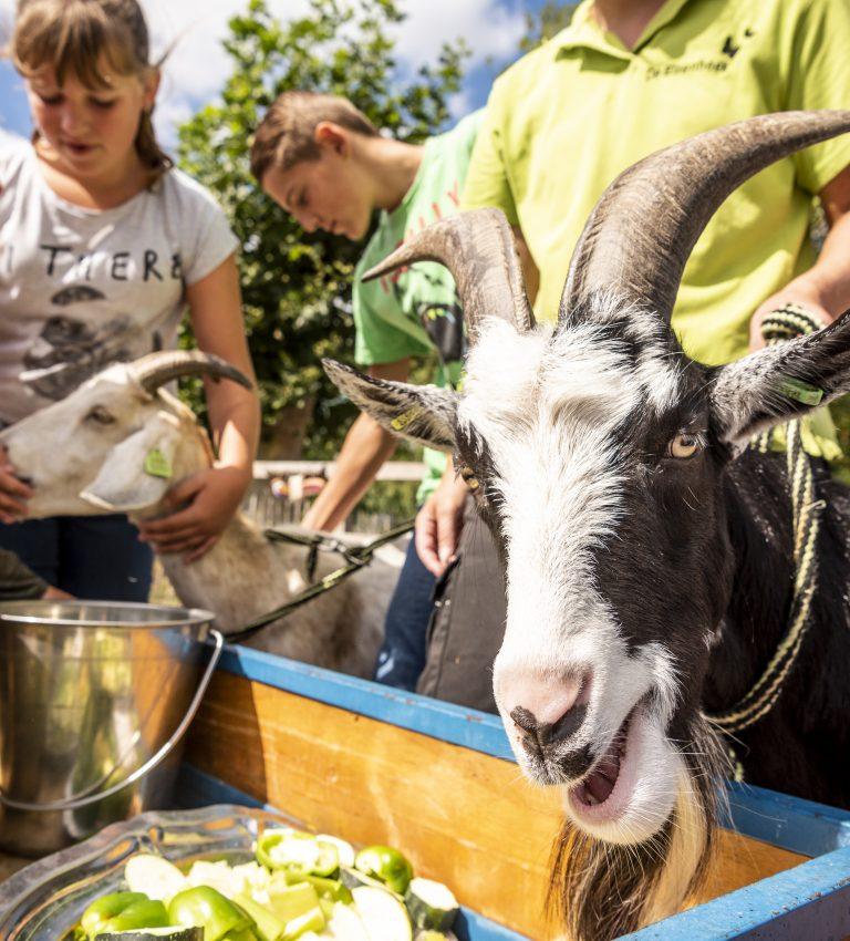 Voerronde - NME-Centrum en Kinderboerderij De Elzenhoek