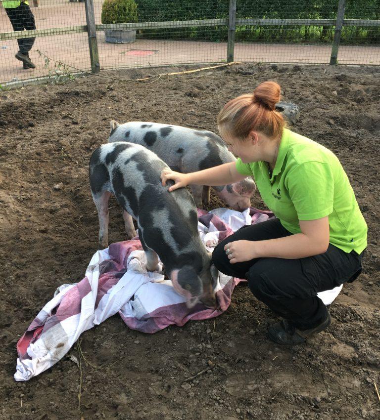 Dierenverzorger - NME-Centrum en Kinderboerderij De Elzenhoek